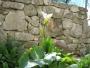 .. tohle taky - jaro v plném proudu, nádhera